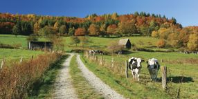 Let's Not Pave the F&I Cow Path