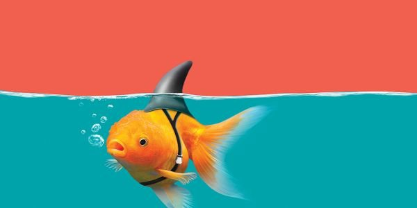 In the sea of digital retail, small fish can hunt like sharks.