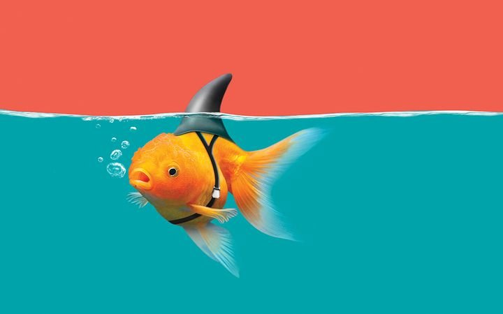 In the sea of digital retail, small fish can hunt like sharks.  - Photo by Wachiraphorn via GettyImages.com