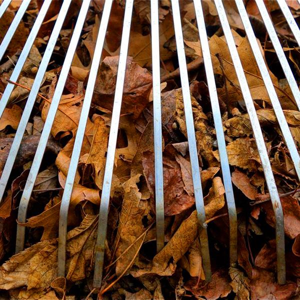 Fall Ahead: Dealer Sites Enjoy Autumn Upswing